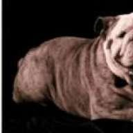 Bulldogbacchus