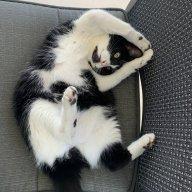 Catscankim