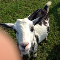 goat soap rulz!