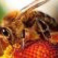 Thistle Creek Honey